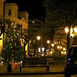 Albero Piazza Municipio